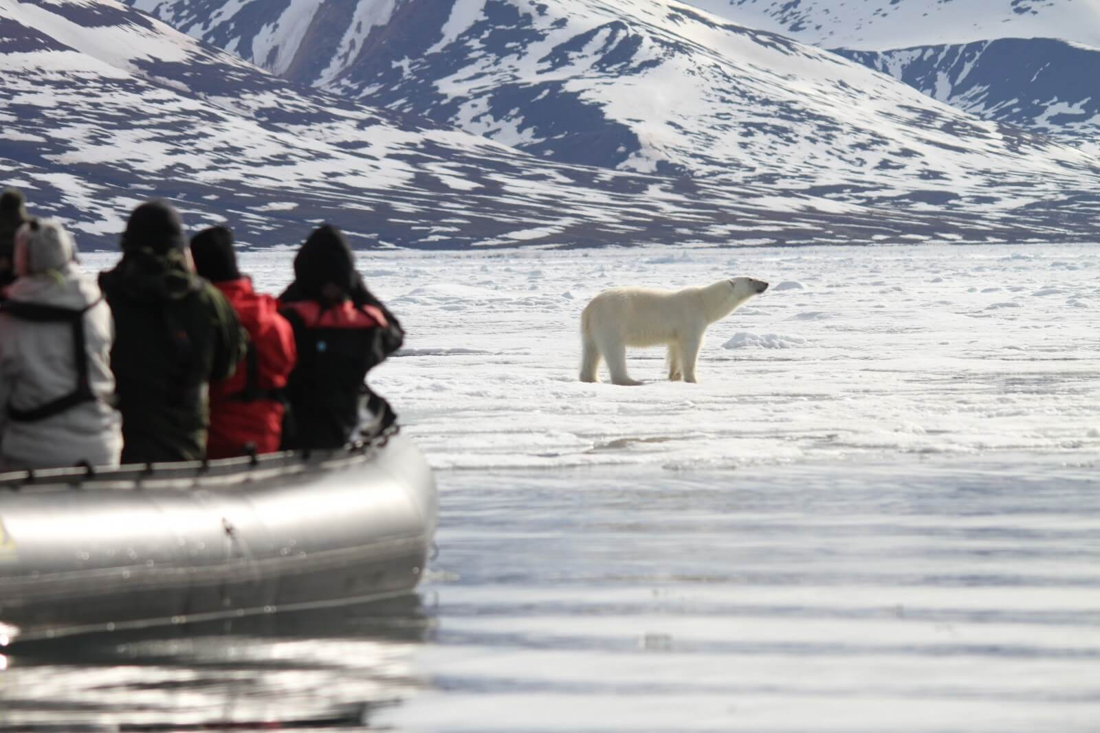 North Spitsbergen - Polar Bear Special