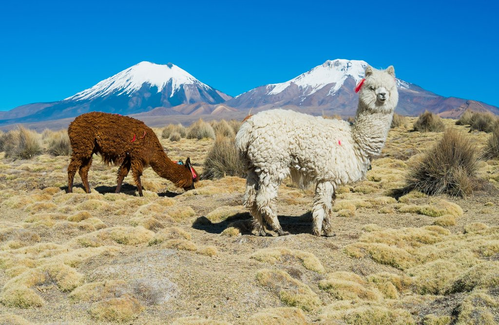 Fully customized Bolivia tours