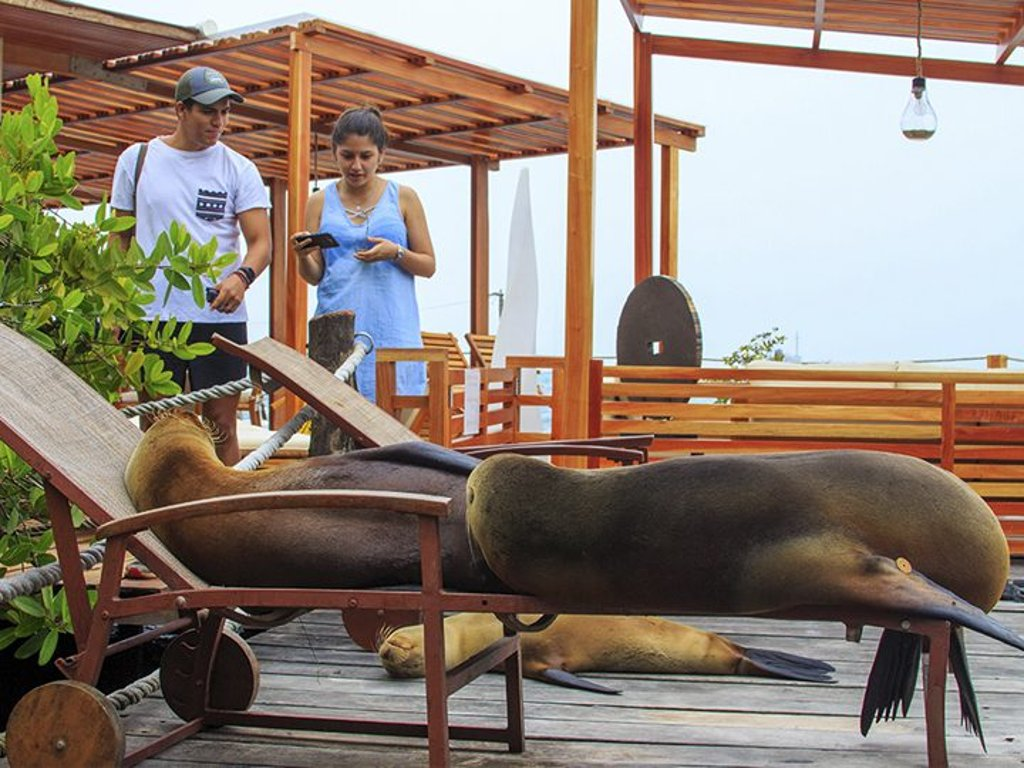 Galapagos Habitat Eco Luxury Hotel Sea Lion Resting Area